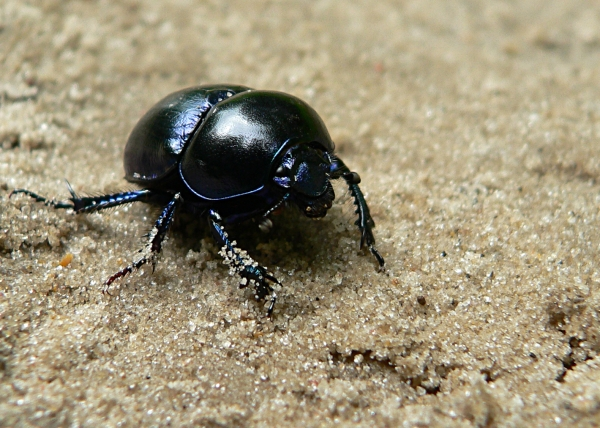 Insectes007.jpg